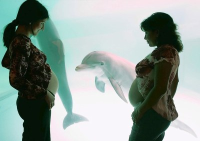 Photo credit: http://www.dolphin-way.com