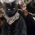 black cat jordan baker the great catsby