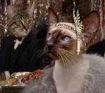 the great catsby siamese cat daisy
