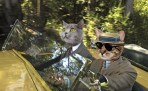 the great gatsby cats