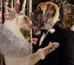 the great gatsby catsby cat and dog