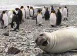 Seal Photobomb