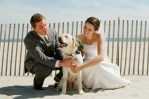 beach wedding dog bridge and groom