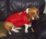 chicago blackhawks hound dog nhl fan