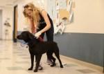 PAWS Chicago oklahoma rescue dog