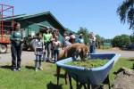 students observe farm animals at catskill animal sanctuary