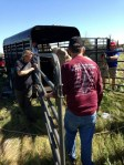 horse feathers equine rescue transports injured animals for care