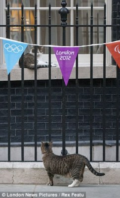 Spy kitty casing the location of her next mission. Photo credit: London News Pictures / Rex Features
