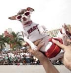 Miami Heat Dog