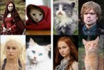 game of thrones cat kitty cast