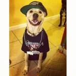 Spurs Dog Fan