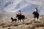 Wild Horses And Cowboys