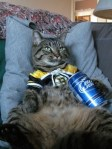 bruins cat with beer