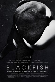 Blackfish opens in theaters on July 19th. Photo Credit: Magnolia Pictures