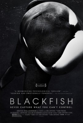 The extraordinary documentary Blackfish about SeaWorld and its treatment of killer whales opens in theaters on July 19. Photo Credit: Magnolia Pictures