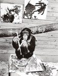Pierre Brassau Chimp Art Project