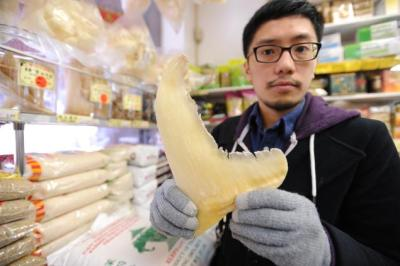 Patrick Kwan of the Humane Society of the United States holds a dried shark fin inside of Chinatown's Po Wing Food Market. Photo Credit: Mark Bonifacio, New York Daily News