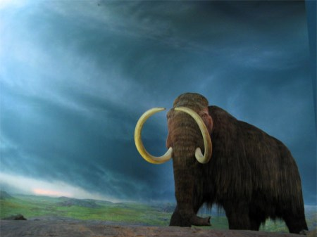A woolly mammoth at Victoria BC's Royal Museum. Photo Credit: Flickr