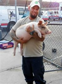 Farm Sanctuary rescue team member, Mario Ramirez, holding piglet Winston after he escaped from New York slaughterhouse. Photo Credit: Associated Press/Animal Care Control of NYC