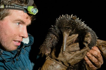 Kirstofer Helgen professed his favorite animal to be the long-beaked echidna of New Guinea. Here he is pictured with one. Photo Credit: Tim Laman, National Geographic