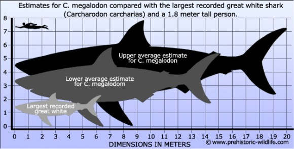 Could the prehistoric megalodon exist today?Probably not, but Shark Week goes in search of the answer. Photo Credit: prehistoric-wildlife.com