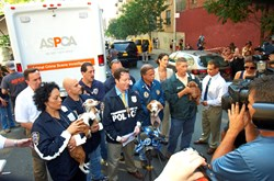 Teamwork in Action: The ASPCA and NYPD working closely together to help bring down a major dog fighting operation in the Bronx in 2012./Photo Credit: PR Web