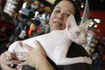 hairless cat, cream Sphynx