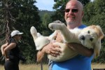 man carries puppy golden retriever