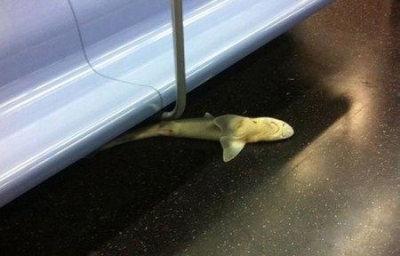 This poor shark somehow ended up dead on a subway. Photo credit: Bsanchz/ Instagram