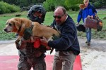 dog rescued from colorado floods