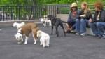 Sirius Dog Park 9/11 memorial K-9 heroes