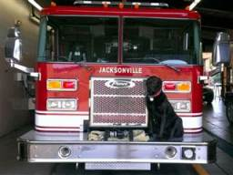 Smokey is a Labrador retriever from Jacksonville, IL. She became a fire dog after being found near death in a home engulfed in flames./Photo credit: NBC via Todd Warrick