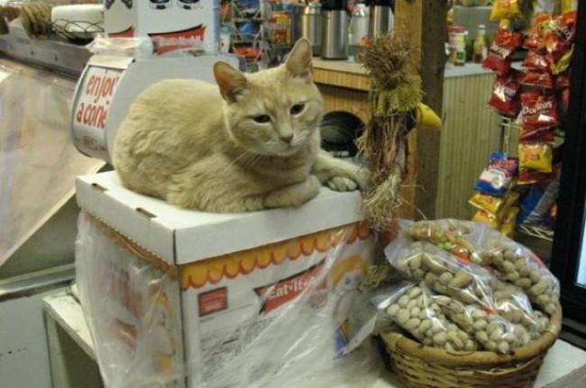 UPDATE: Mayor Cat Survives Assassination Attempt
