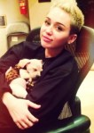 miley cyrus with puppy dog bean