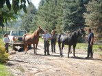 Code 3 Associates rescue horses in Colorado