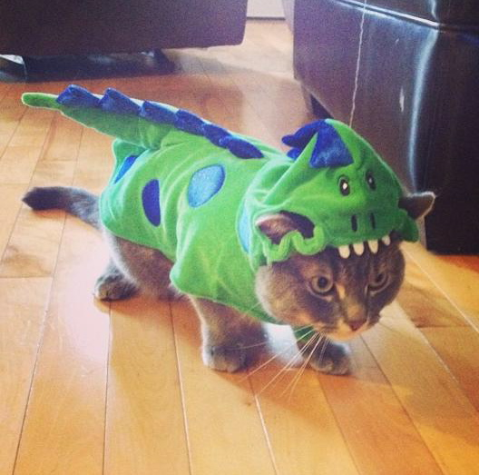 Oscar dressed up as a dragon.
