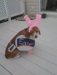 dog halloween costume energizer bunny