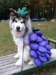 dog as grape jelly halloween costume