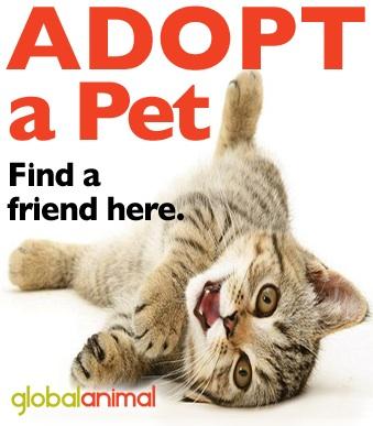 Adopt-a-kitten-small