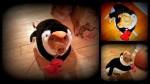 Dog in Penguin Halloween Costume