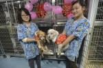 Dogs-Meet-at-Shelter-china