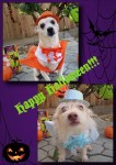 Dumb and Dumber dog halloween costumes