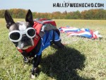Echo dog patriotic skydiver halloween costume
