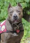 Elle 2013 American Hero Dog