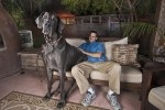 Giant George world's tallest dog, great dane on couch