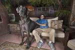 Giant George, world's tallest dog, and guardian Dave Nasser, Great Dane, Dog breeds,