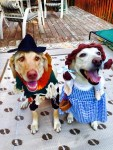 wizard of oz dogs in halloween costumes