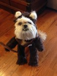 chewie the ewok, star wars god halloween costume