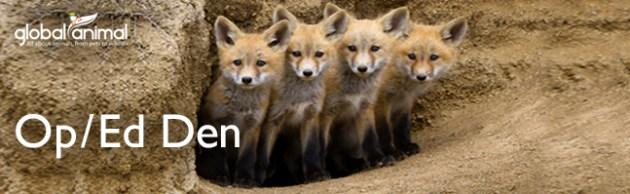 Baby foxes in den in Global Animal Op/Ed articles