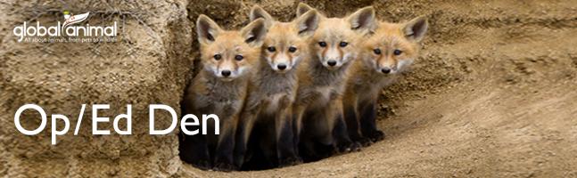 Baby foxes in den in Global Animal Op/Ed articles
